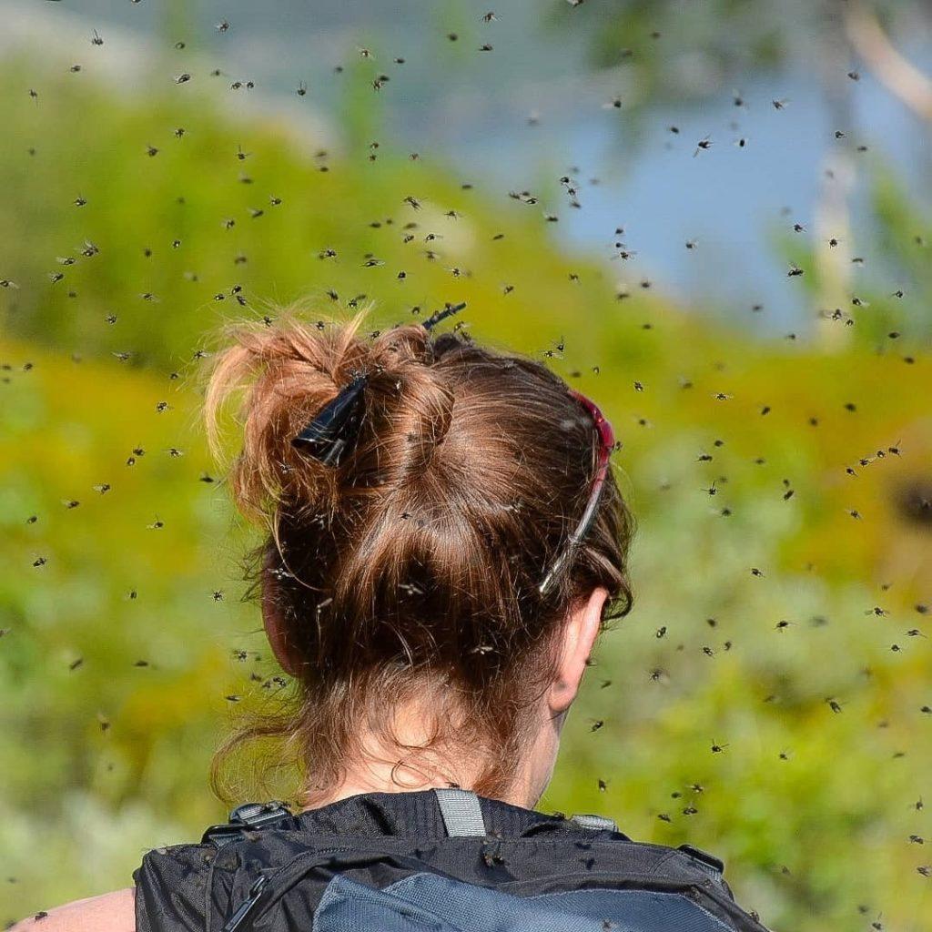 Doğal Sivrisinek Kovucular