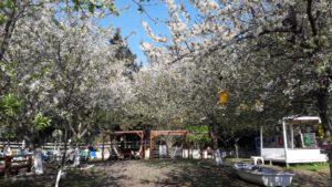 İstanbul Sarıyerde kamp alanı giritli