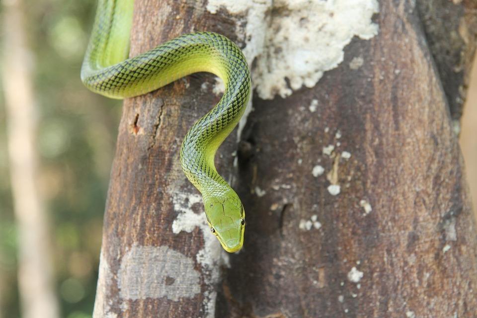 kampta yılan tehlikesi