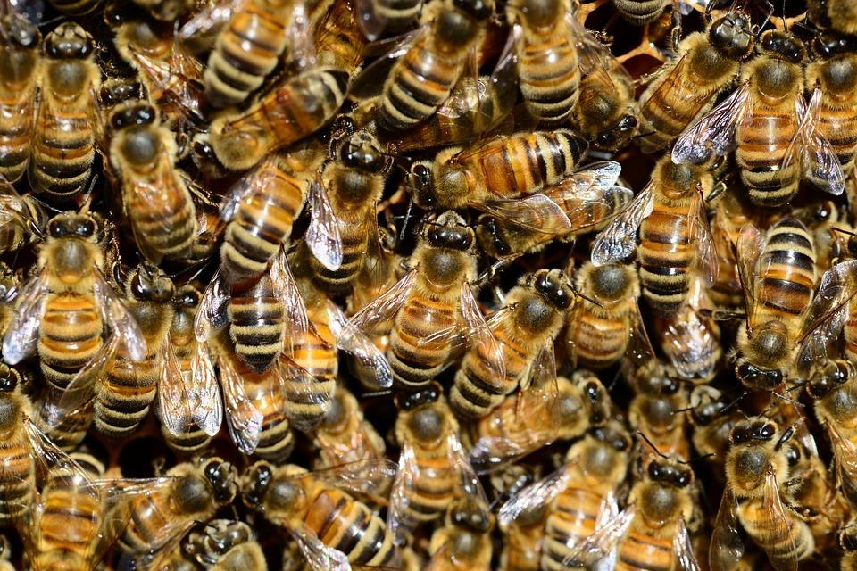 kampta ormanda arı saldırısı