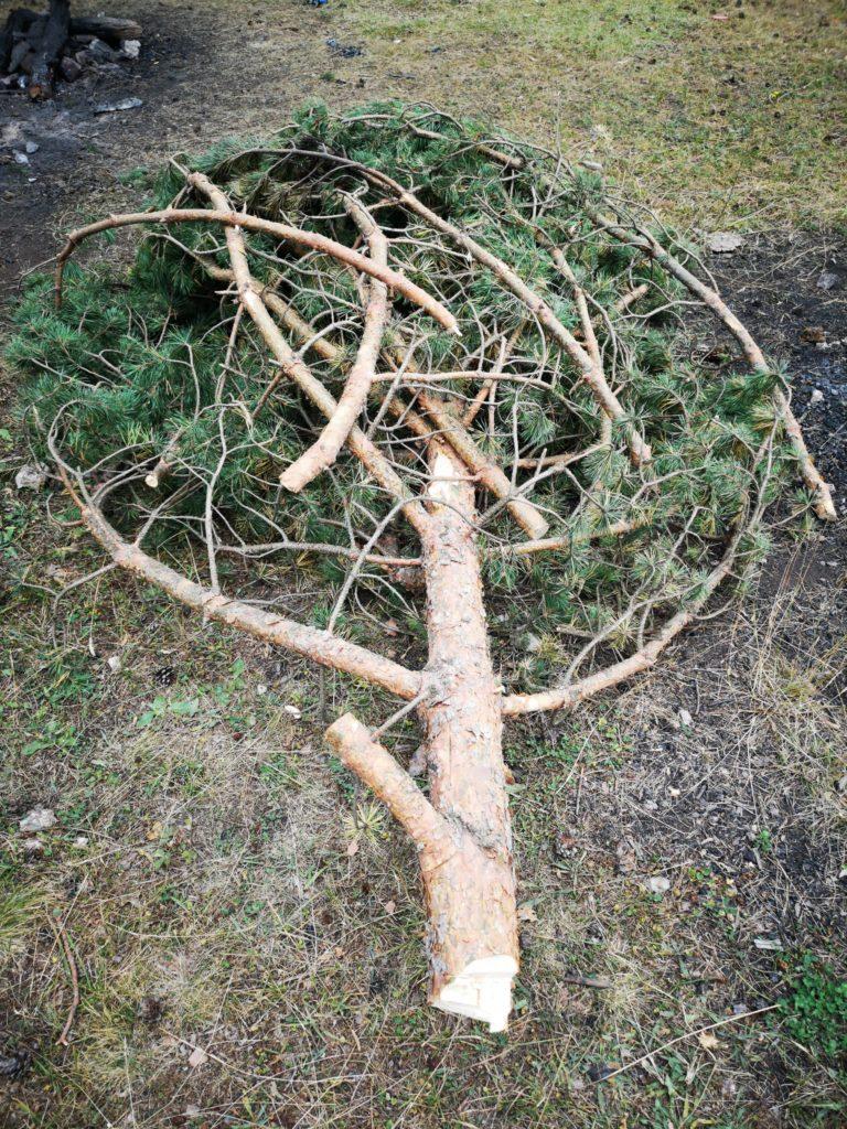 yaş ağaç yanmaz