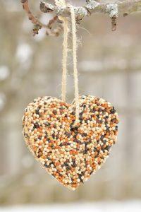 kuşlar için doğal kraker yapımı